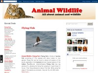 Animal Wildlife