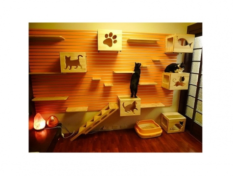 Creative Ideas That Will Keep Your Cat Happy and in Good Shape Picture