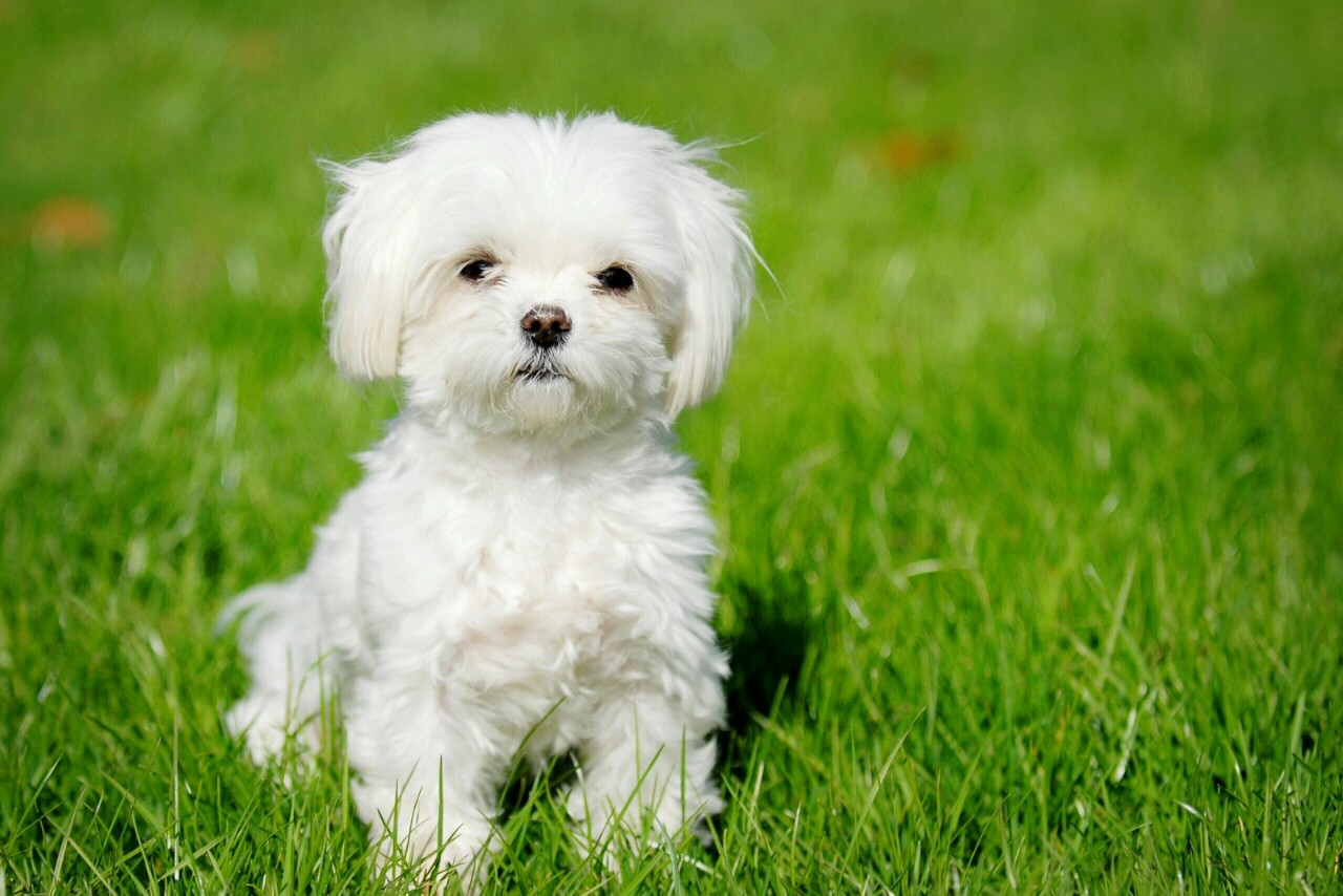 Small Dog Breeds for Apartments – Blogs Avenue