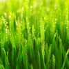 How to Plant Grass