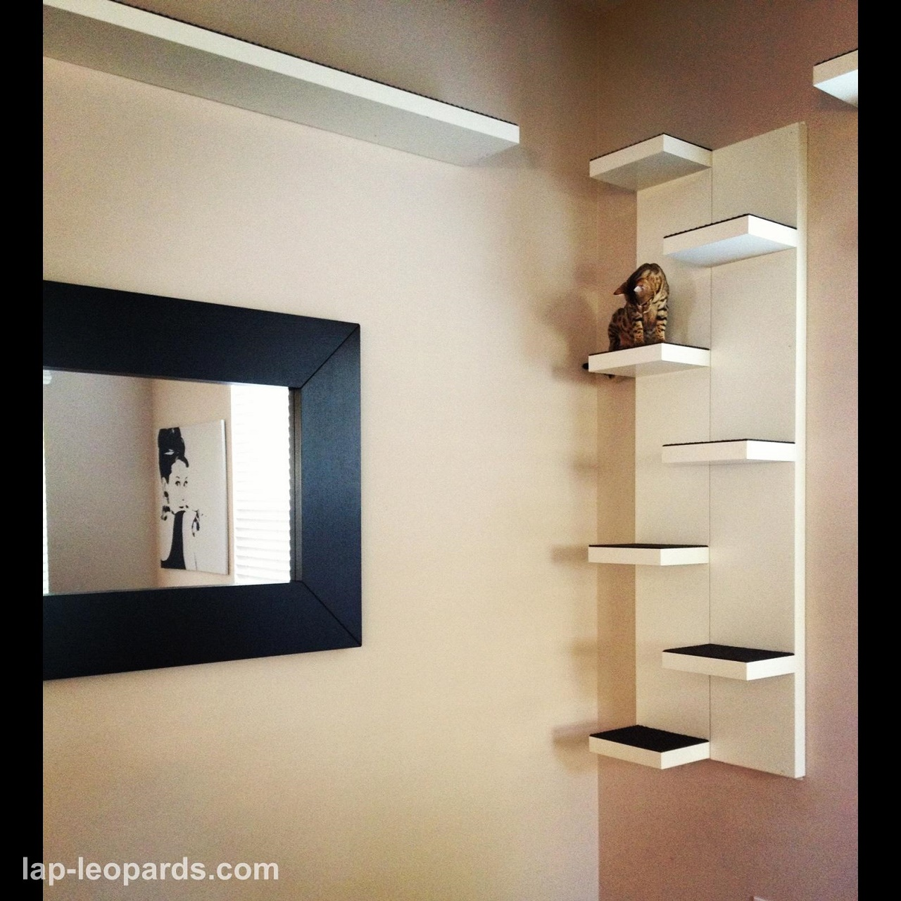 Creative Ideas That Will Keep Your Cat Happy And In Good Shape Blogs Avenue